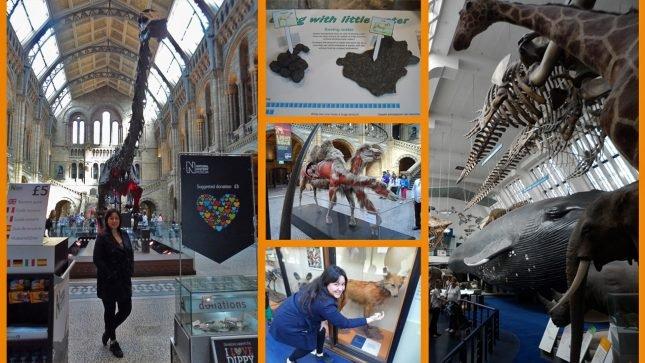 roteiro 1 dia em londres - museu de história natural