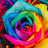 Festa das flores de Holambra 2019