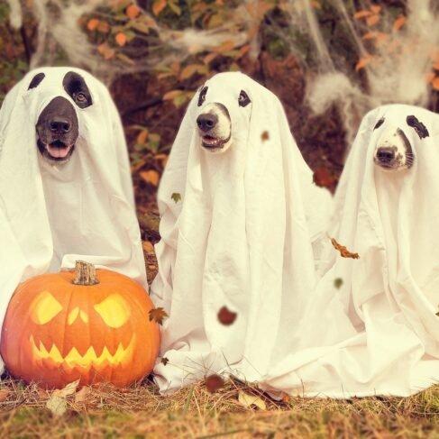 Decoração de festa Halloween: 42 ideias simples [FOTOS e DICAS]